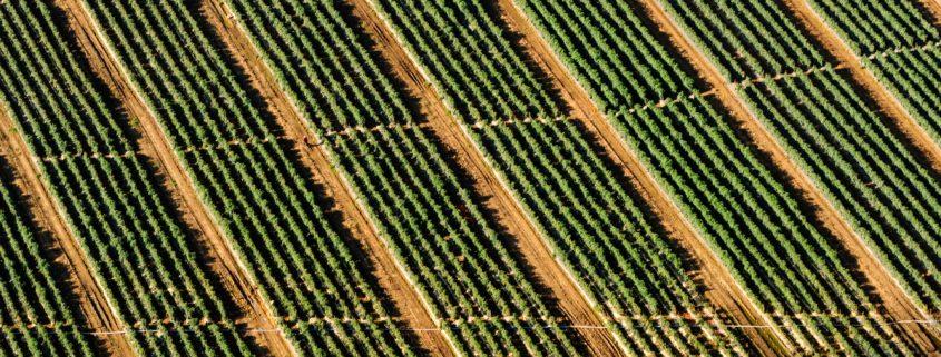 Fields image